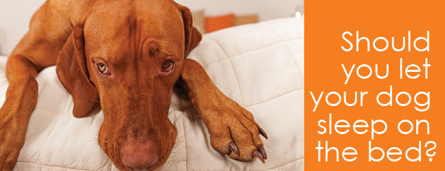 Dog behavior Question: should you let your dog sleep on the bed?