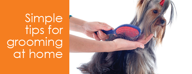 Easy tips for grooming your dog at home