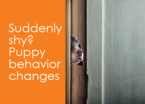 Shy puppy behavior changes