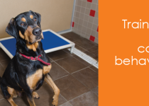 Dog behavior: training to wait