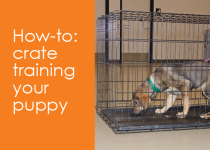 crate-training-your-puppy